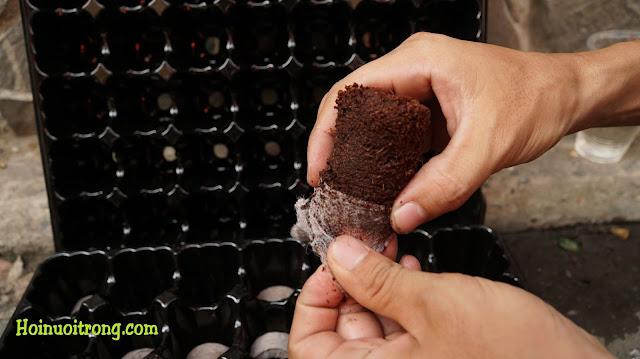 Bóc vỏ bên ngoài, để kiểm tra chất lượng xơ dừa và dinh dưỡng bên trong