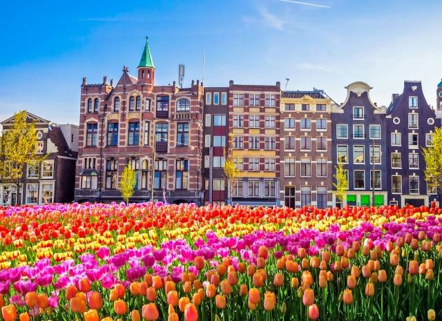 amsterdam-tulipani-poracci-in-viaggio