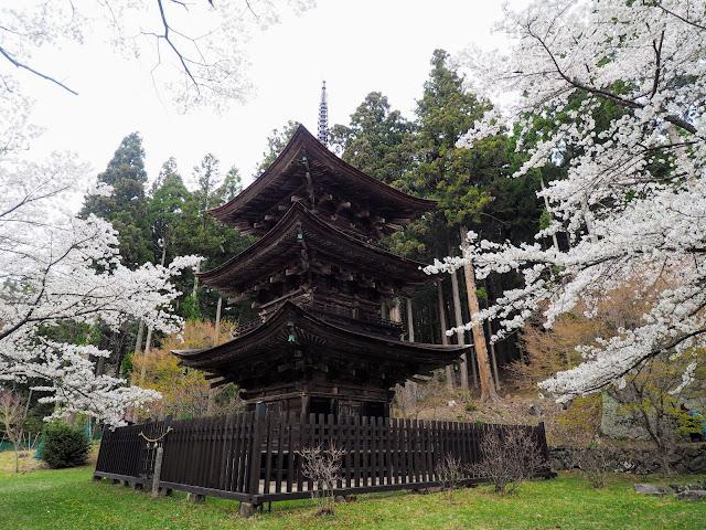 新海三社神社 桜
