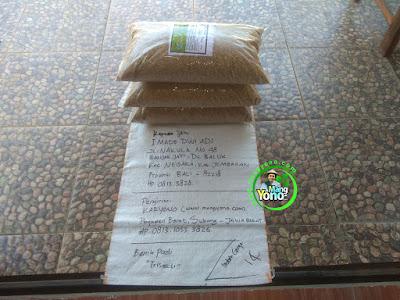 Benih pesanan I MADE DWI ADI Jembaran, Bali   (Sebelum Packing)