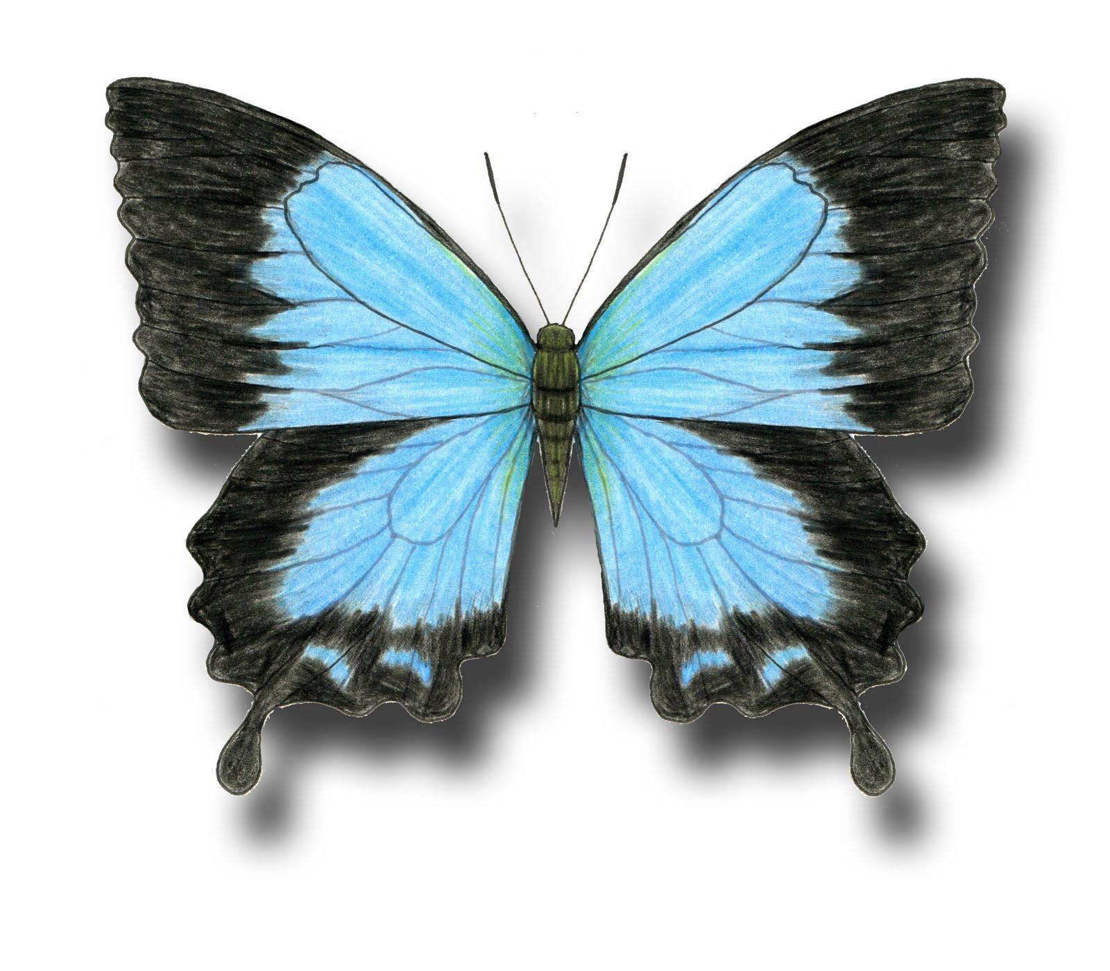 Aileen Biser's Blog: January 2012