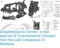 https://sciencythoughts.blogspot.com/2017/03/daspletosaurus-horneri-new-species-of.html