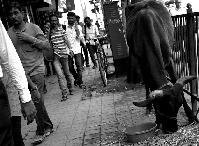 monochrome monday, black and white weekend, black and white, cow, people, street, streetphoto, pavement, charni road, mumbai, incredible india,