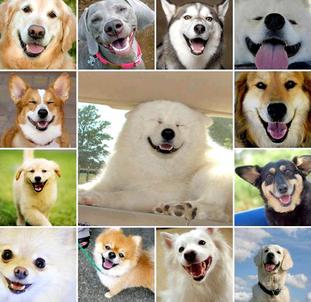 Acting Cute Collections: Dog Smile When They Acting Cute