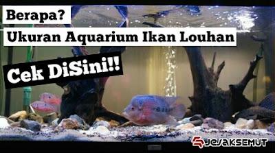 Cara Memilih Aquarium  untuk Ikan Louhan