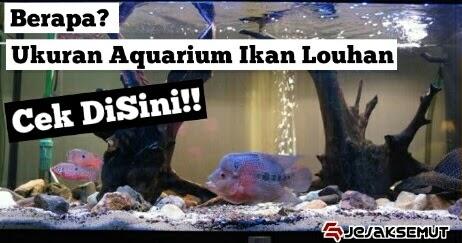 Wajib Tahu Ini 12 Cara Memilih Aquarium Untuk Ikan Louhan Jejaksemut