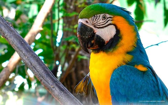 Bosque dos Papagaios está novamente aberto à visitação