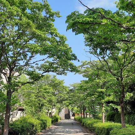5 Hal yang ditemui Jelang Musim Panas di Jepang