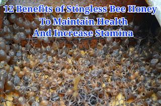 12 Benefits of Stingless Bee Honey to Maintain Health and Increase Stamina