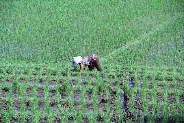 मेहनत का फल मीठा होता है | Moral Story in Hindi