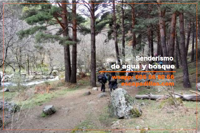 Ruta de agua y bosque con - escapadillas.com