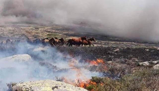 Cinco fallas del INRA precedieron la crisis ambiental en Chiquitanía