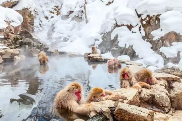 5 Wisata Pemandian Air Panas di Jepang dengan Pemandangan Alam yang Indah!
