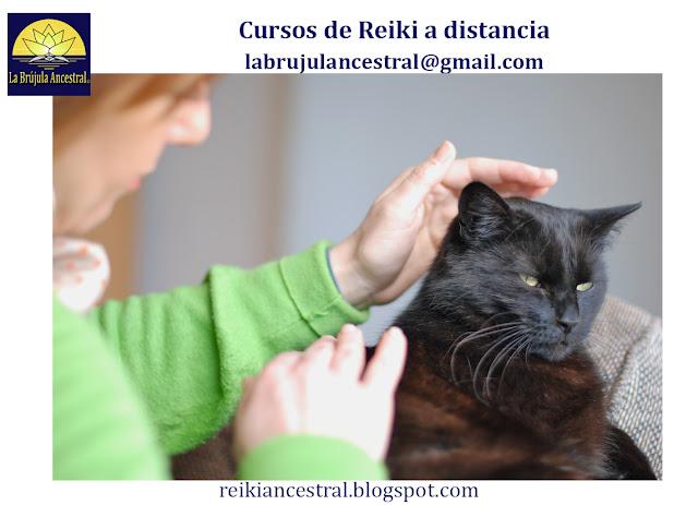Reiki para Mascotas