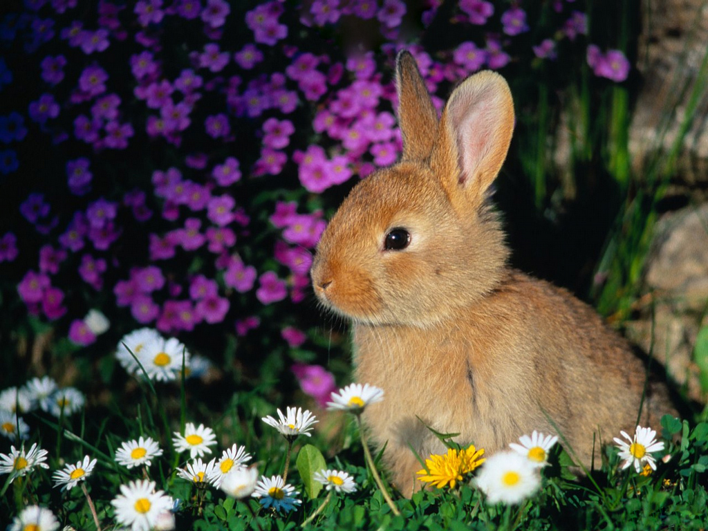 cute rabbit wallpaper - photo #40