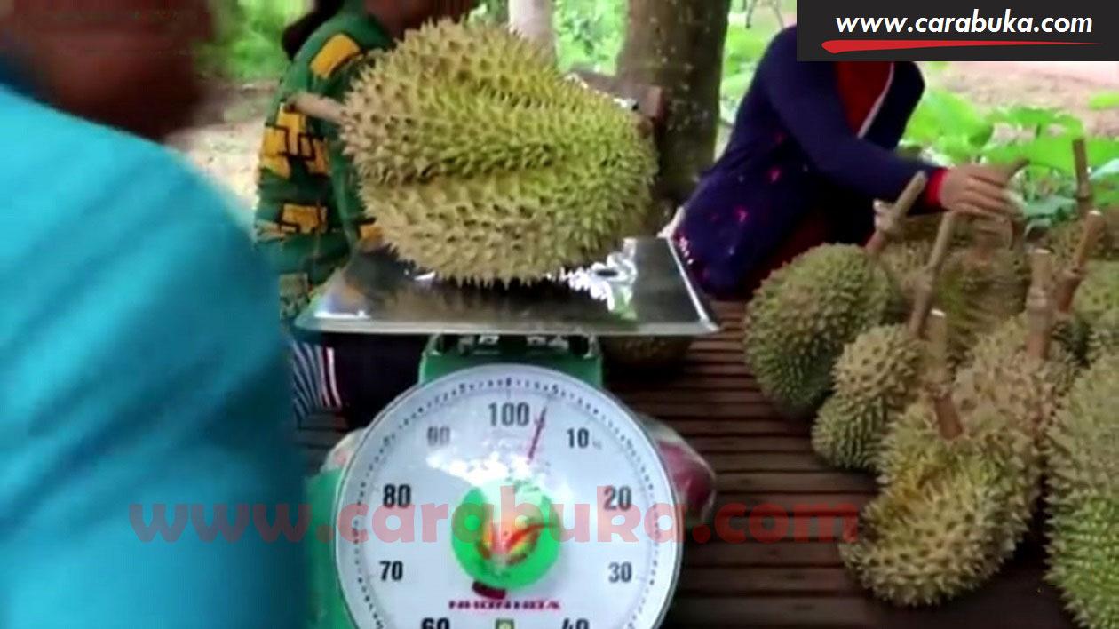 Tips Cara Memilih Durian Matang dan Manis 10