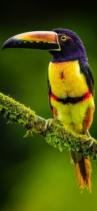 Black and yellow bird on green branch wallpaper