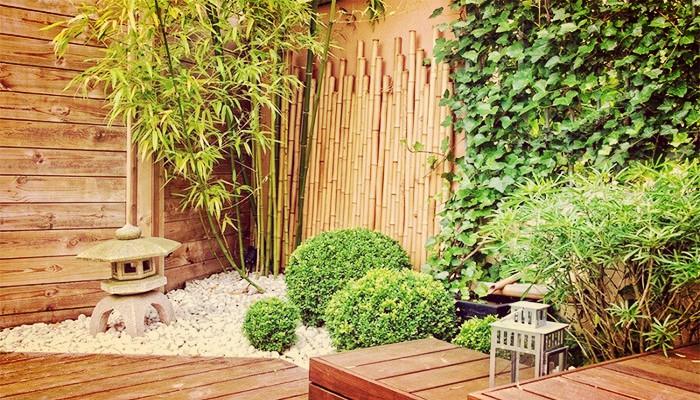 Plantas de jardin enredaderas