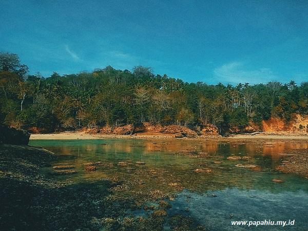 penyu-hijau-hewan-purba-penjelajah-laut-di-pulau-pasoso