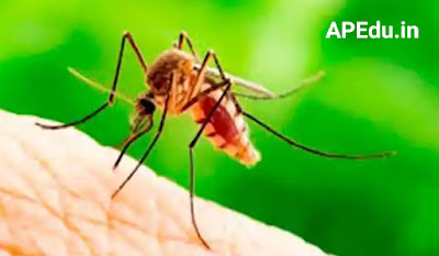 Which Blood group does Mosquitoes likes Most