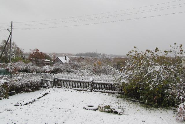 первый снег 2019