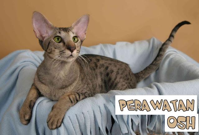 Perawatan Kucing OSH