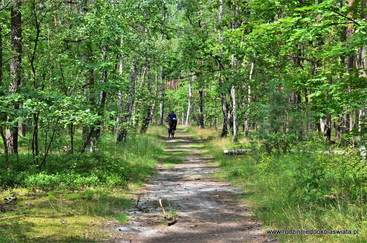 Szlak do Starego Dębu rowerem- Kampinoski Park Narodowy