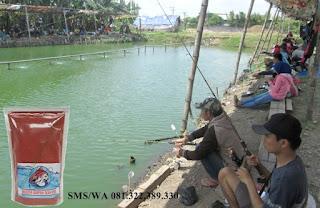 Umpan Ikan Mas khusus untuk Siang Hari