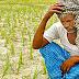 KISAN के लिए फसल गिरदावरी (Fasal Girdawari ) की जानकारी | Girdawari App In Madhya Pradesh