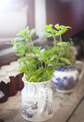 Oregano has great benefits and wide uses
