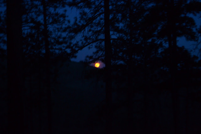 moon rising in dark trees
