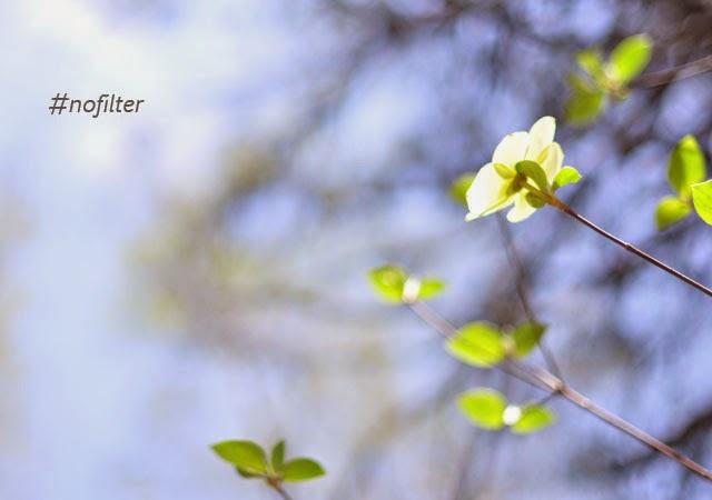 flowers, sky, nofilter