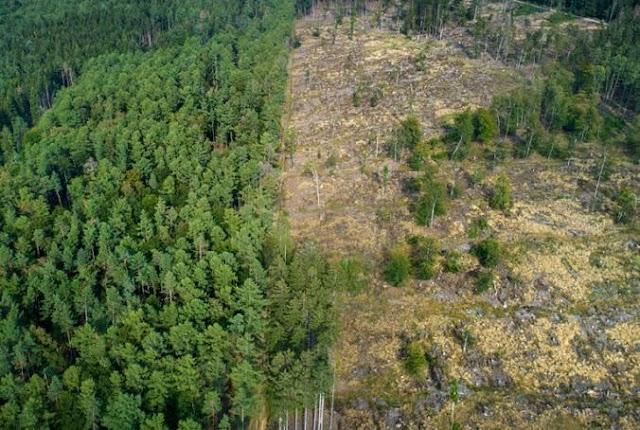 Mata Atlântica: o desafio de ZERAR o desmatamento para permitir a recuperação do Bioma onde vivem mais de 70% da população brasileira