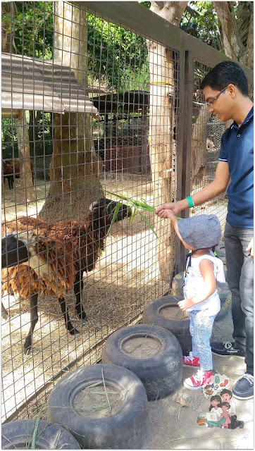 Animal Feeding at The Fun Farm at Sta. Elena