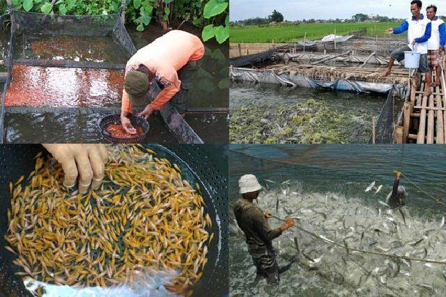 Nama Wadah Budidaya Ikan - Jaring Apung