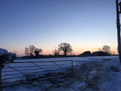 snow covered field with bare trees in the background,  at sunrise