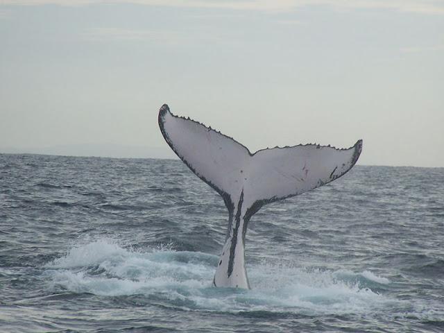 لماذا الحيتان ضخمة جدا ؟