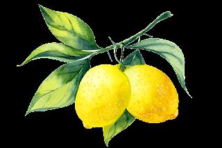 Orange Lemon sketch