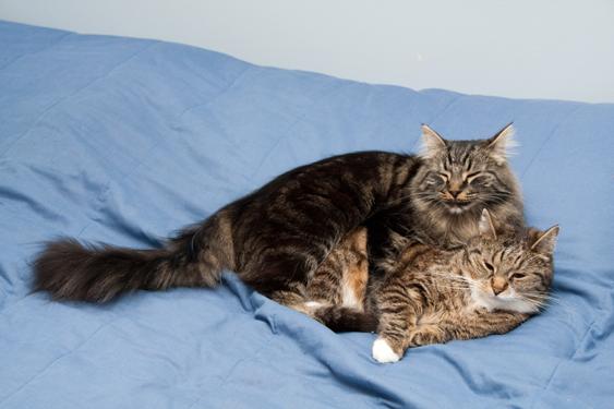 Kissan tunne-elämä, seksuaalisuus