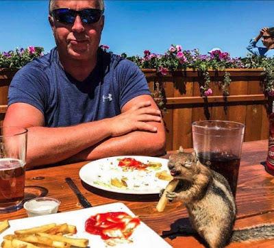 Eichhörnchen lustig beim Essen - Lustige Bilder