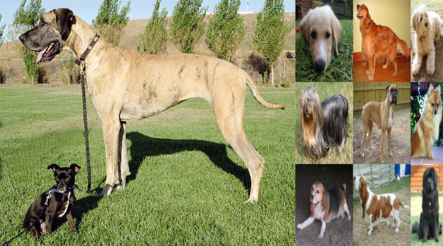 Popular breeds of dogs