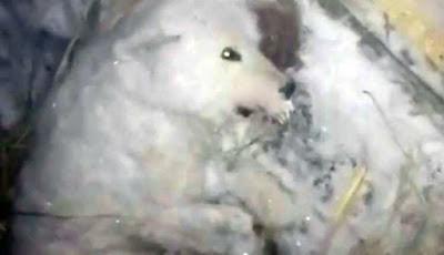 Sadis, Pemilik Siram Anjing Hingga Membeku di Rumahnya