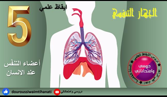 بحث حول الجهاز التنفسي أعضاء التنفس لدى الانسان ايقاظ علمي سنة خامسة
