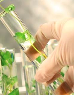 gellan gum clear solution in plant tissue cutlure