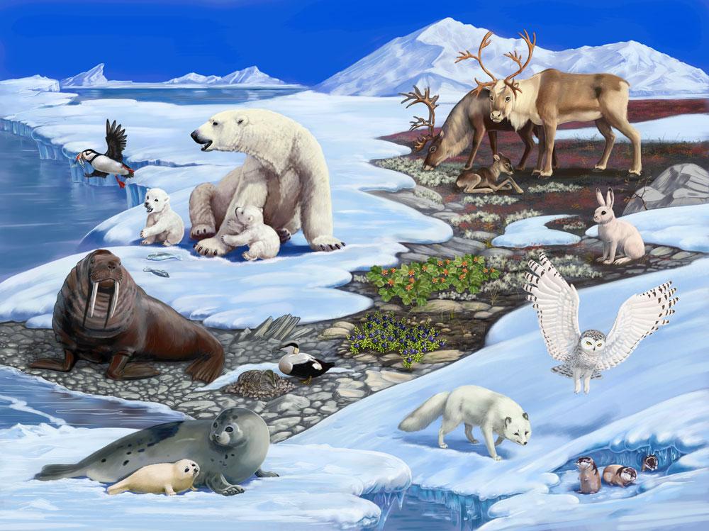 только создает картинки животные севера и животные жарких страница расположения можно использовать