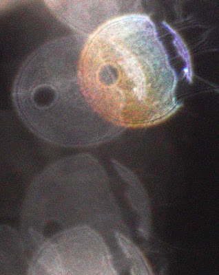 gradient color orb with stripe and hole