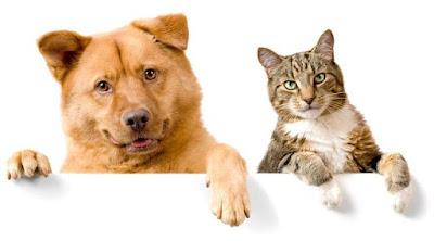 Perros y gatos conviviendo