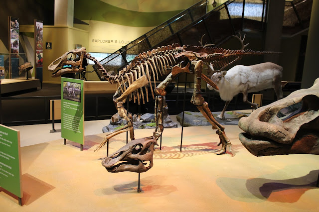 Dinosaurs' unique bone structure key to carrying weight