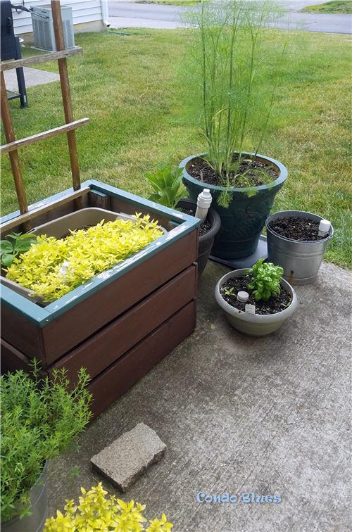 how to organize a container garden