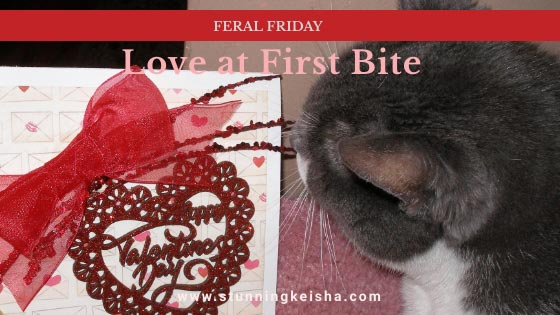 Feral Friday—Love at First Bite